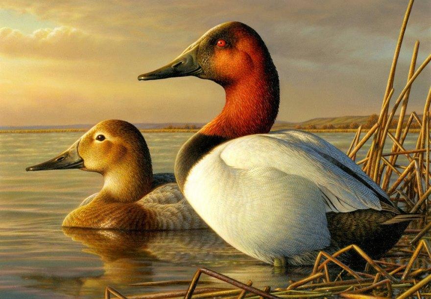 39528847_Adam Grimm art 2013 federal duck stamp winner